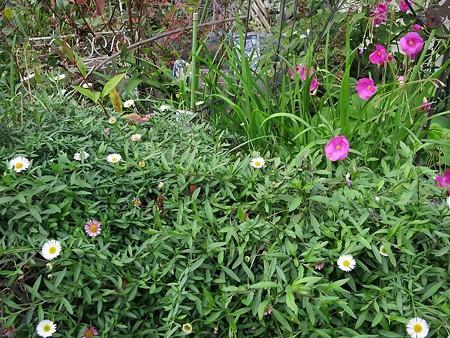 僕のお家の庭1