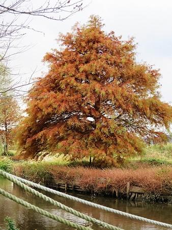 晩秋(風の日の散歩は刺激的9)