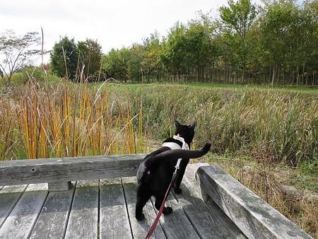 静かに歩く秋散歩7