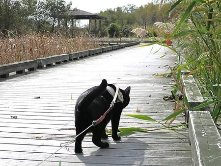 静かに歩く秋散歩19