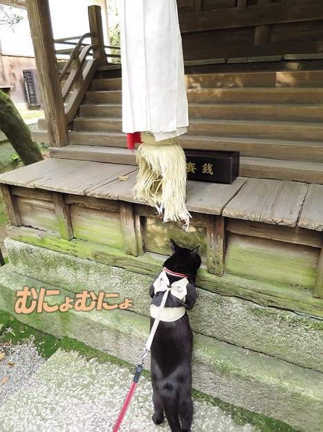 猫の七五三(チャン3歳)