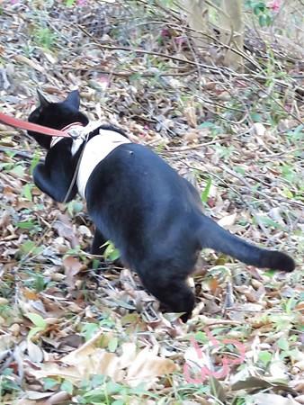 紅葉狩りな散歩15