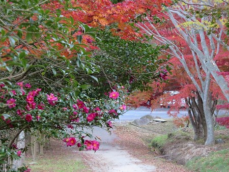 紅葉狩りな散歩25