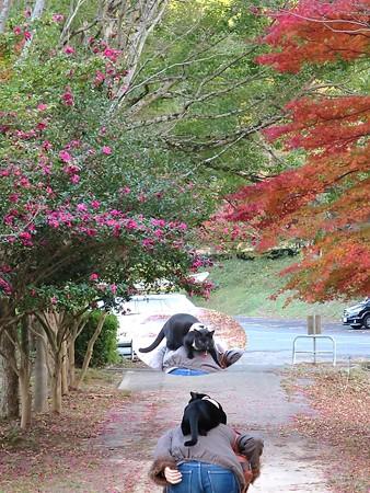 紅葉狩りな散歩26