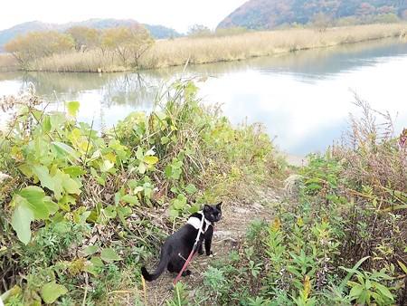 水辺の散歩6