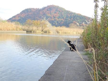 水辺の散歩16