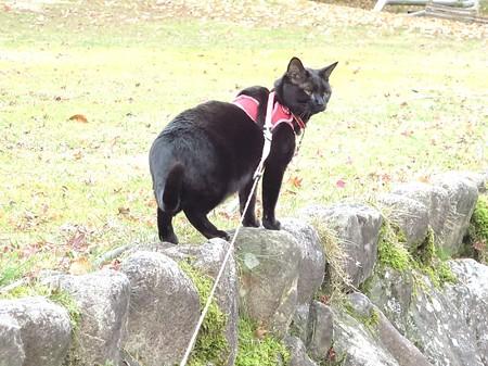 紅葉の終わり_黒猫チャンプ15