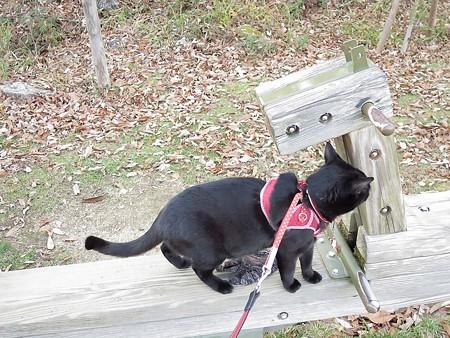 紅葉の終わり_黒猫チャンプ22