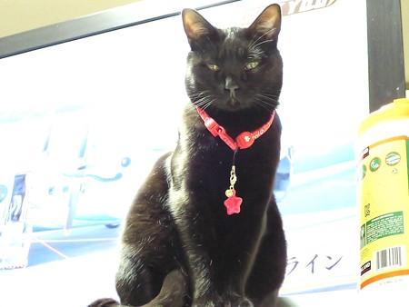 黒猫チャンプのカラー1
