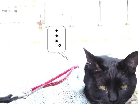 黒猫チャンプの旅は道連れ7