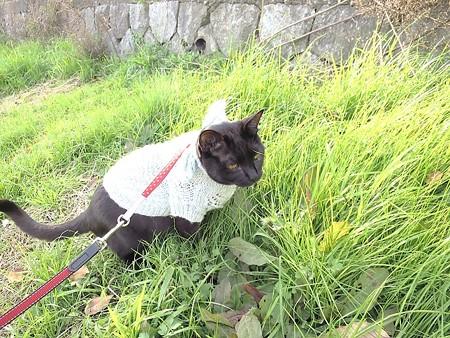 黒猫チャンプの旅は道連れ10