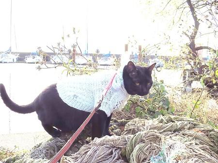 黒猫チャンプの旅は道連れ13