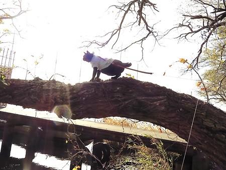 黒猫チャンプの旅は道連れ25