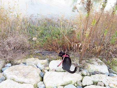 寒い水辺の散歩6