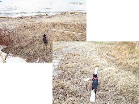 寒い水辺の散歩15