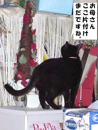 黒猫チャンプ2