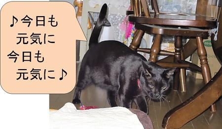 黒猫チャンプ猫の師走5