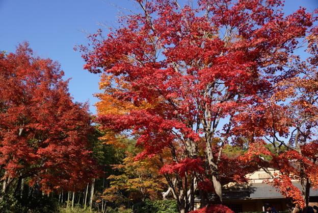 紅葉と青空!20141115