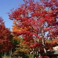 写真: 紅葉と青空!20141115