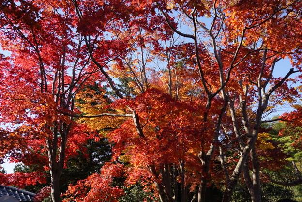 紅葉の風景!20141115