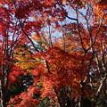 写真: 紅葉の風景!20141115