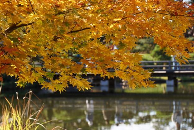 写真: 黄葉と橋!20141115