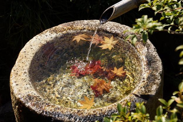 水鉢に浮かぶモミジ!20141115