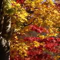 写真: 黄葉と紅葉のコラボ!20141115