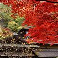 Photos: 真赤なモミジと聴秋閣2014