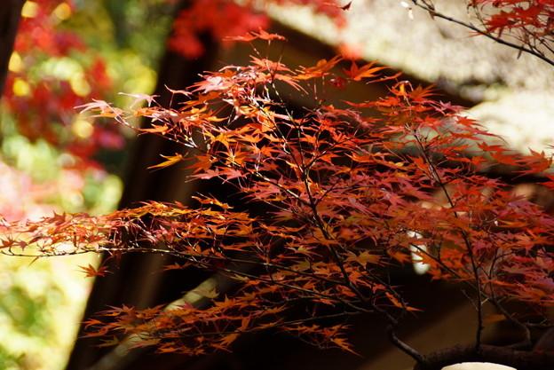 Photos: 紅葉の三渓園2014