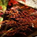 紅葉の三渓園2014
