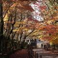 写真: 晩秋の紅葉、光明寺2014