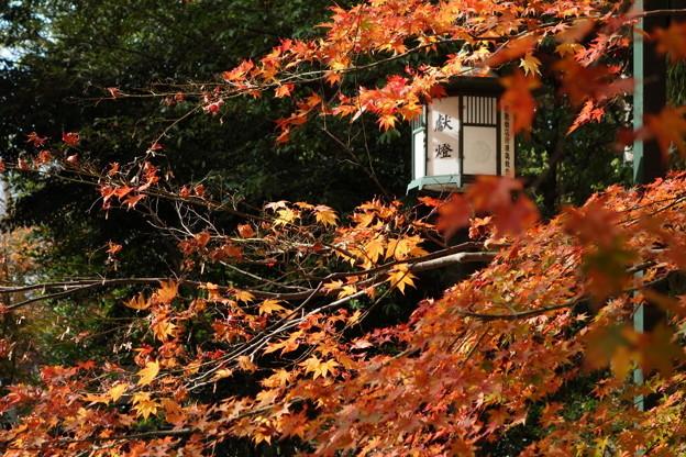 紅葉と燈籠、八坂神社!