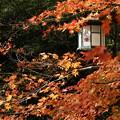 写真: 紅葉と燈籠、八坂神社!