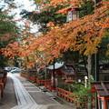 Photos: 紅葉彩る参道、八坂神社!2014