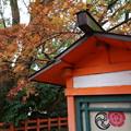 Photos: 知恩院の山門はただいま修繕中!