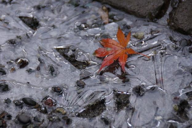 氷と落ちもみじ!2015