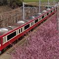 河津桜と赤い電車2015a
