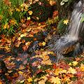 Photos: 流れる水と紅葉!(101123)