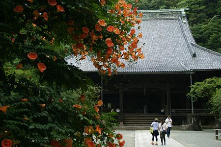 ノウゼンカズラの咲くお寺!(110709)