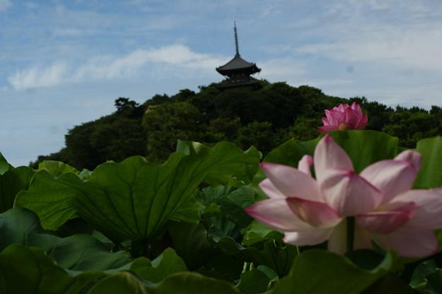 Photos: 蓮の花と三重の塔!(110718)