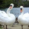 Photos: 白鳥ブラザーズ