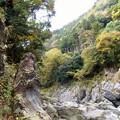 Photos: rs-141110_30_鳩の巣渓谷の流れ(鳩の巣渓谷) (50)
