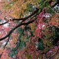 rs-141202_26_渓谷橋付近の紅葉(梅が瀬渓谷) (6)