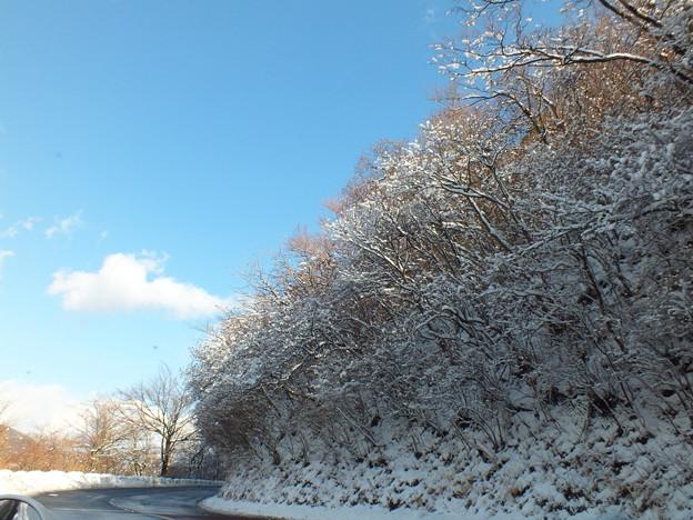 雪の薄化粧