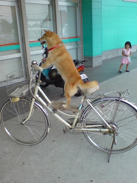 驚愕の自転車犬
