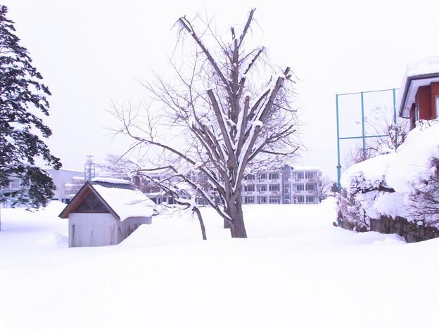 【東北】雪に埋もれる校庭 山形[2015]