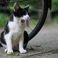 野良ネコに魅せられて