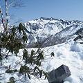 Photos: 雪とヤブの殿堂