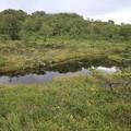 140828-76北海道ツーリング・神仙沼・神仙沼手前の小さな沼